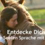 Seelensprache mit Pferden